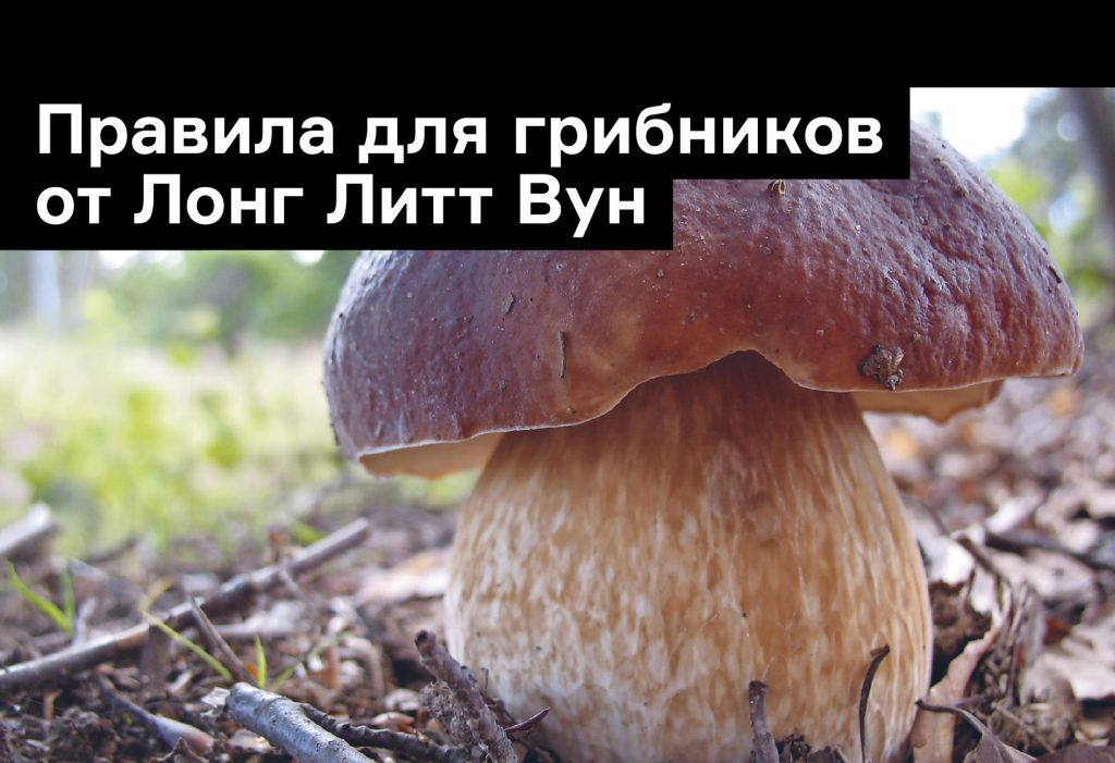Правила для грибников от Лонг Литт Вун: гигиена, походы и ядовитые грибы